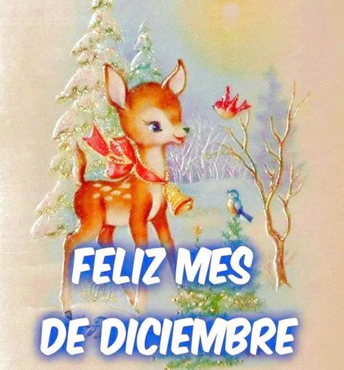 Imágenes y frases Feliz mes de diciembre